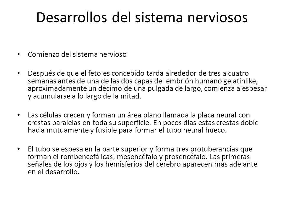 Desarrollos del sistema nerviosos