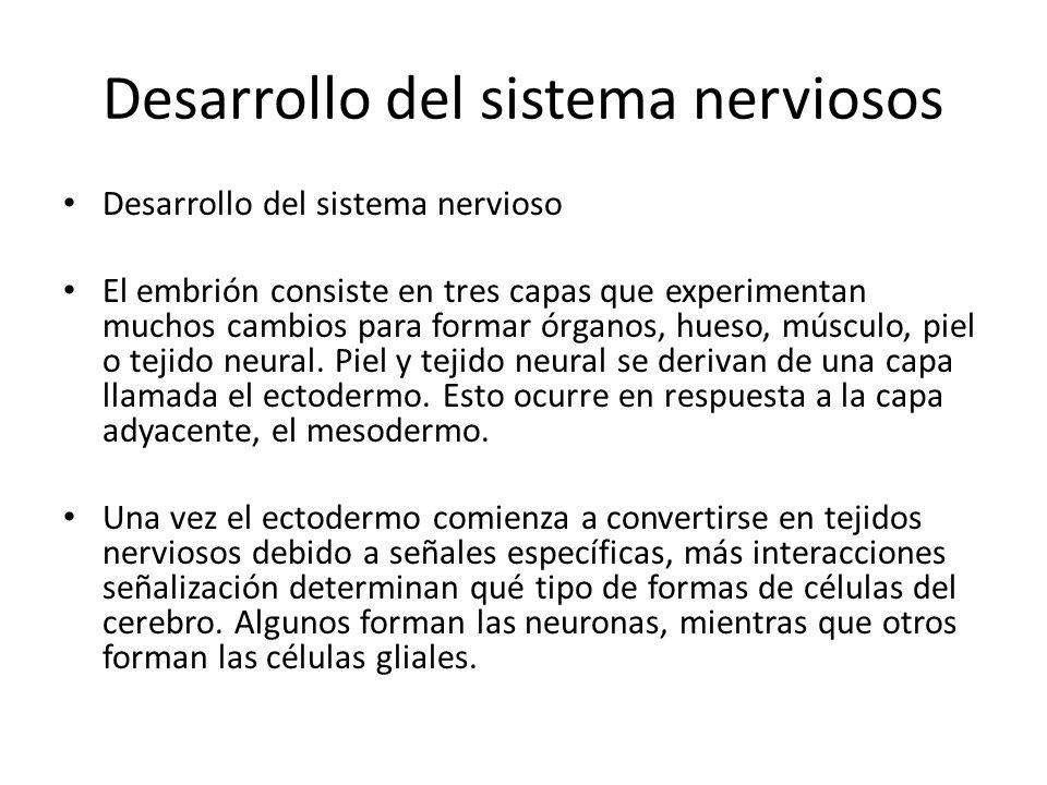Desarrollo del sistema nerviosos