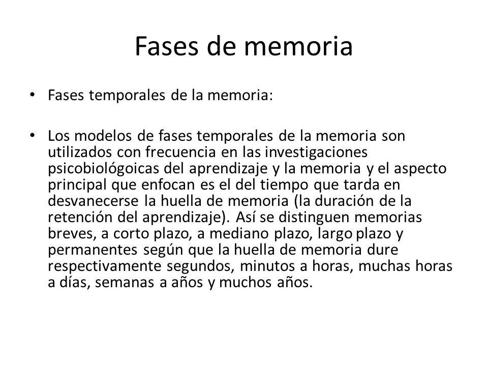 Fases de memoria Fases temporales de la memoria:
