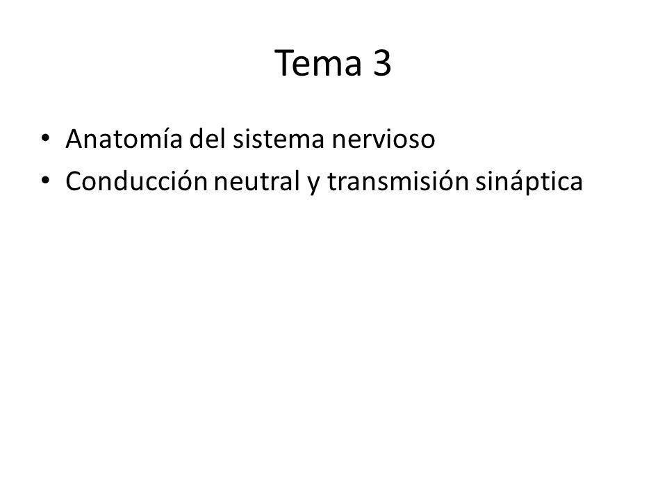 Tema 3 Anatomía del sistema nervioso