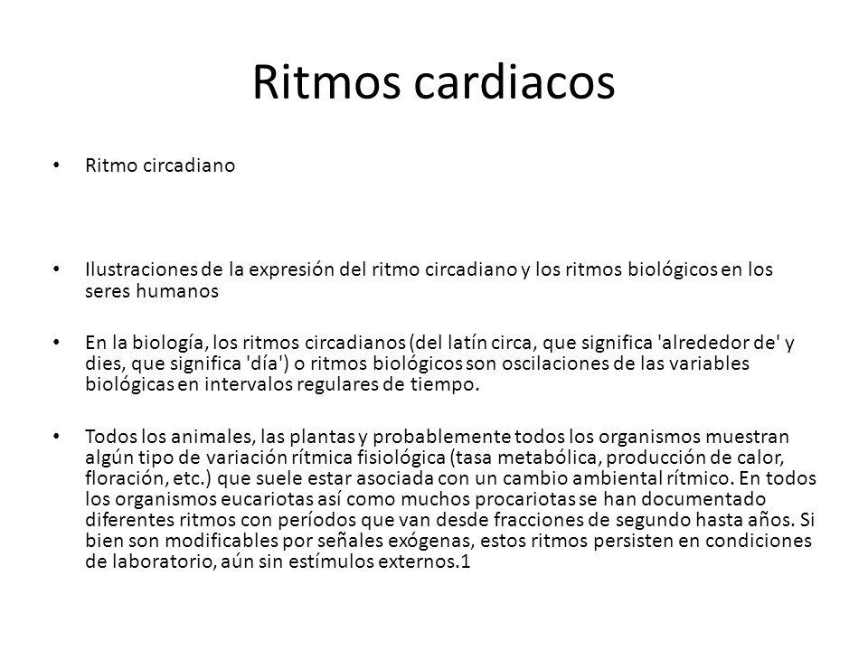 Ritmos cardiacos Ritmo circadiano