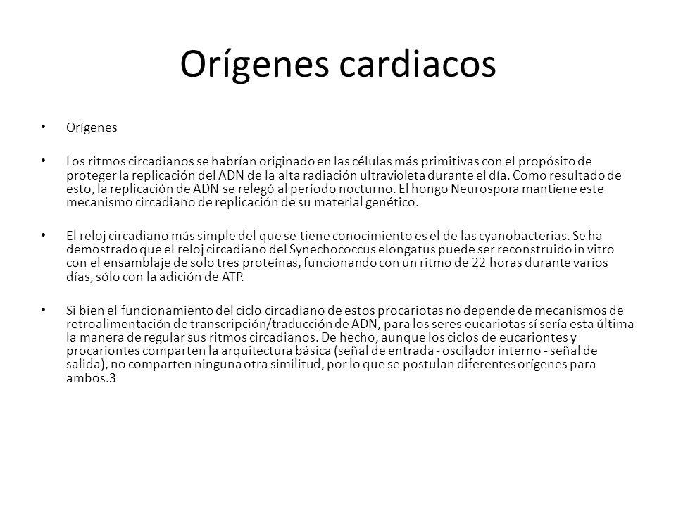Orígenes cardiacos Orígenes