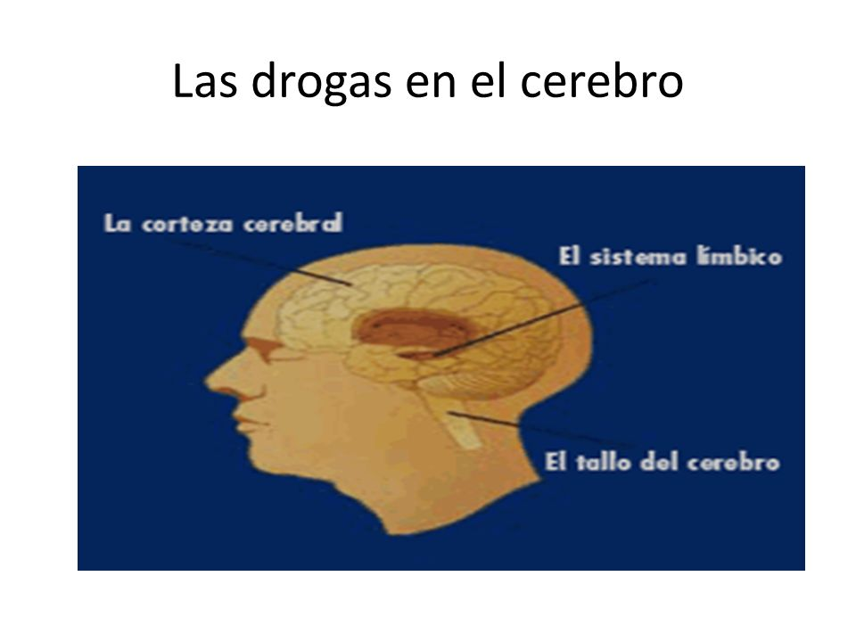Las drogas en el cerebro