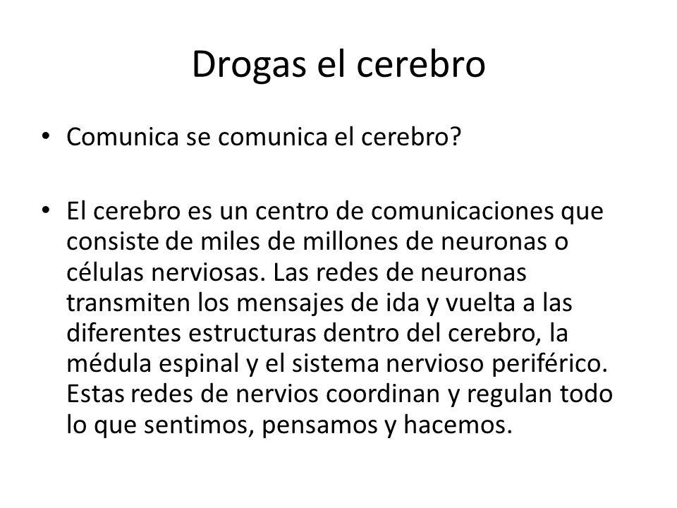 Drogas el cerebro Comunica se comunica el cerebro
