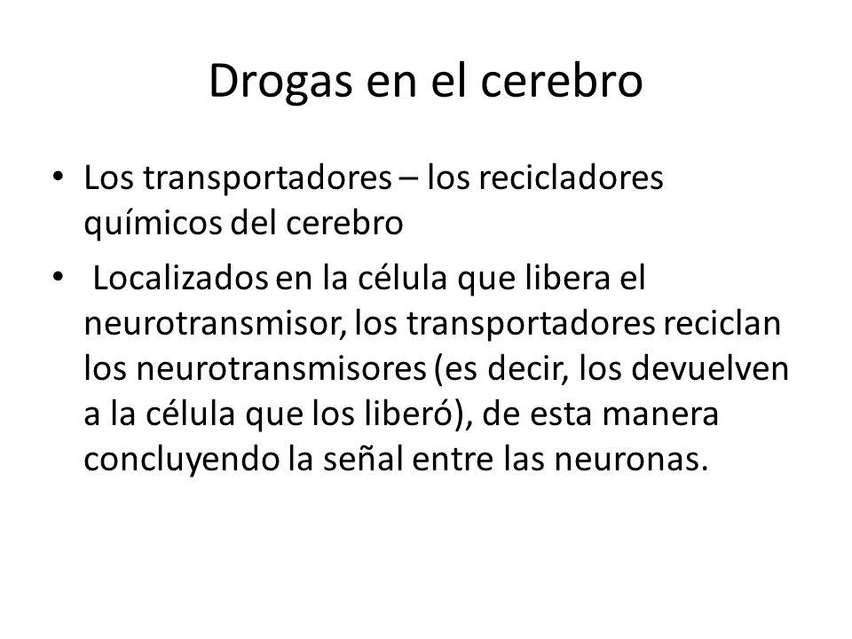 Drogas en el cerebro Los transportadores – los recicladores químicos del cerebro.