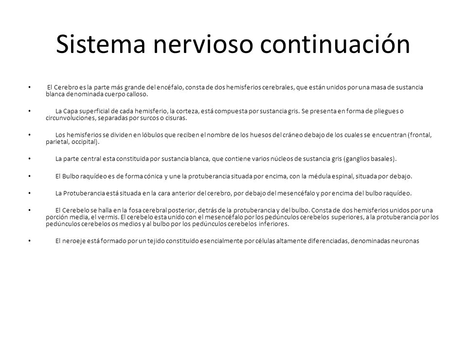 Sistema nervioso continuación