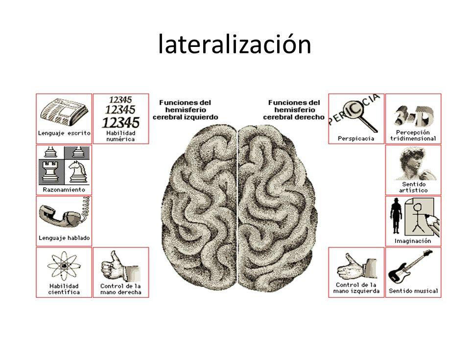 lateralización
