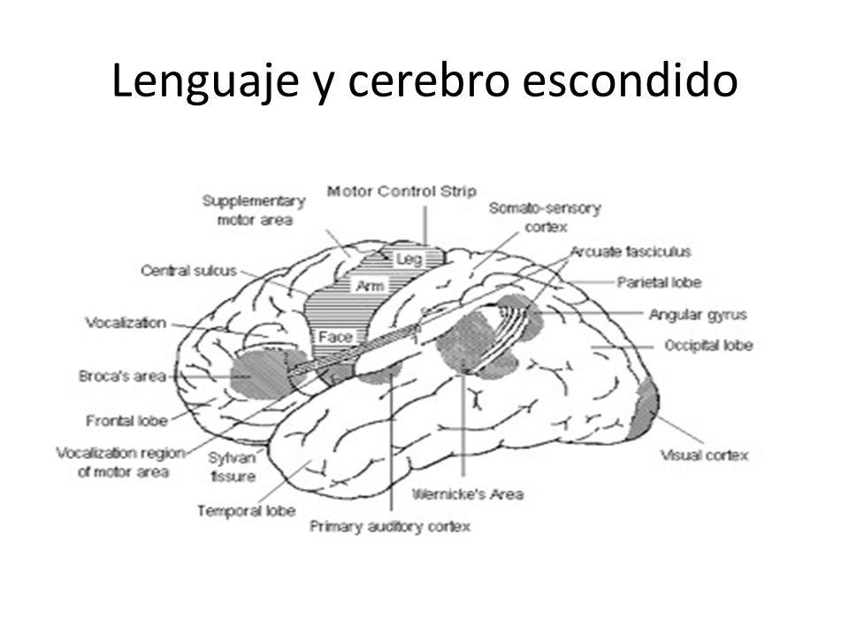 Lenguaje y cerebro escondido