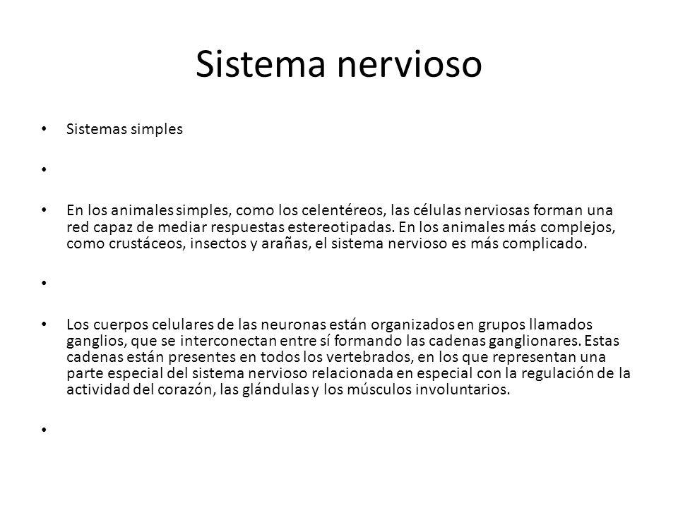 Sistema nervioso Sistemas simples