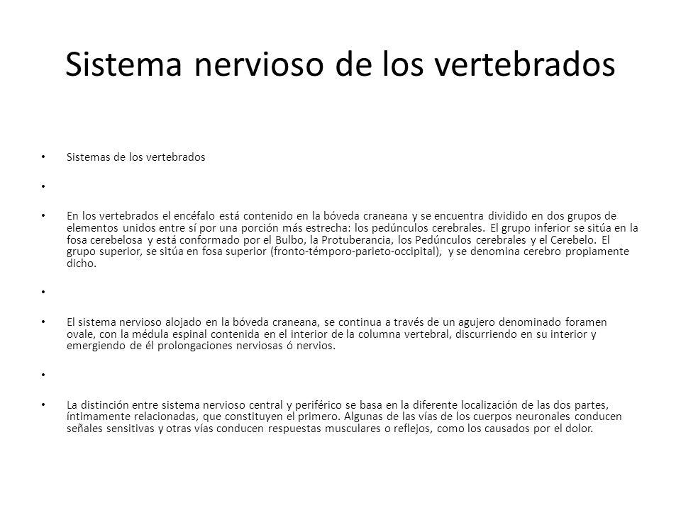 Sistema nervioso de los vertebrados