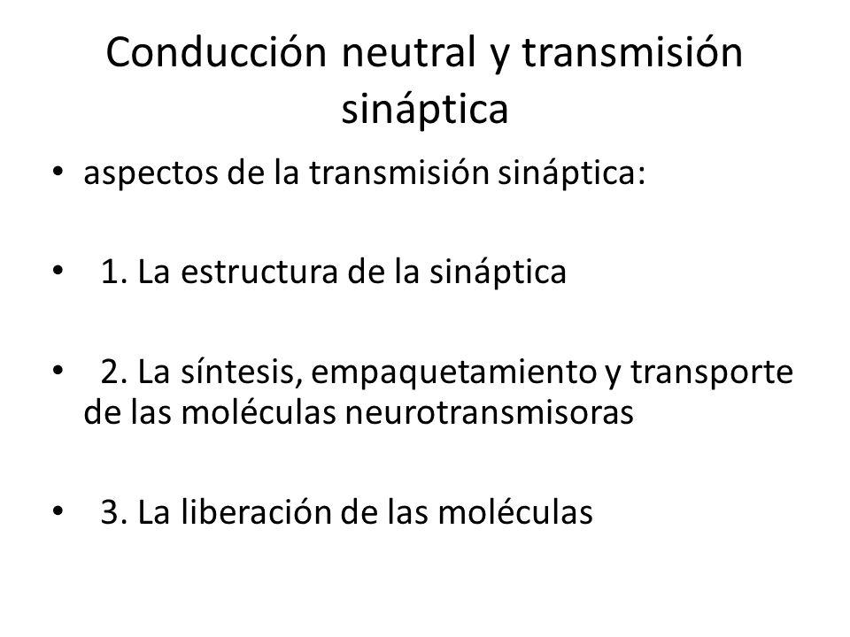 Conducción neutral y transmisión sináptica