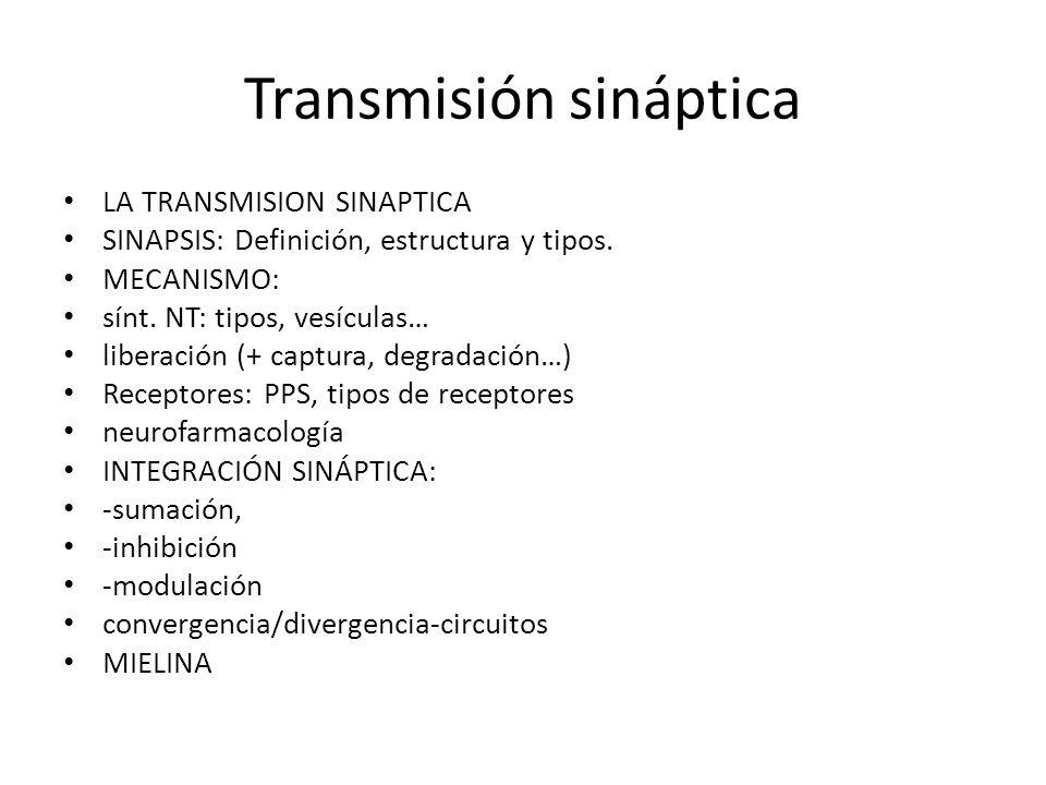 Transmisión sináptica