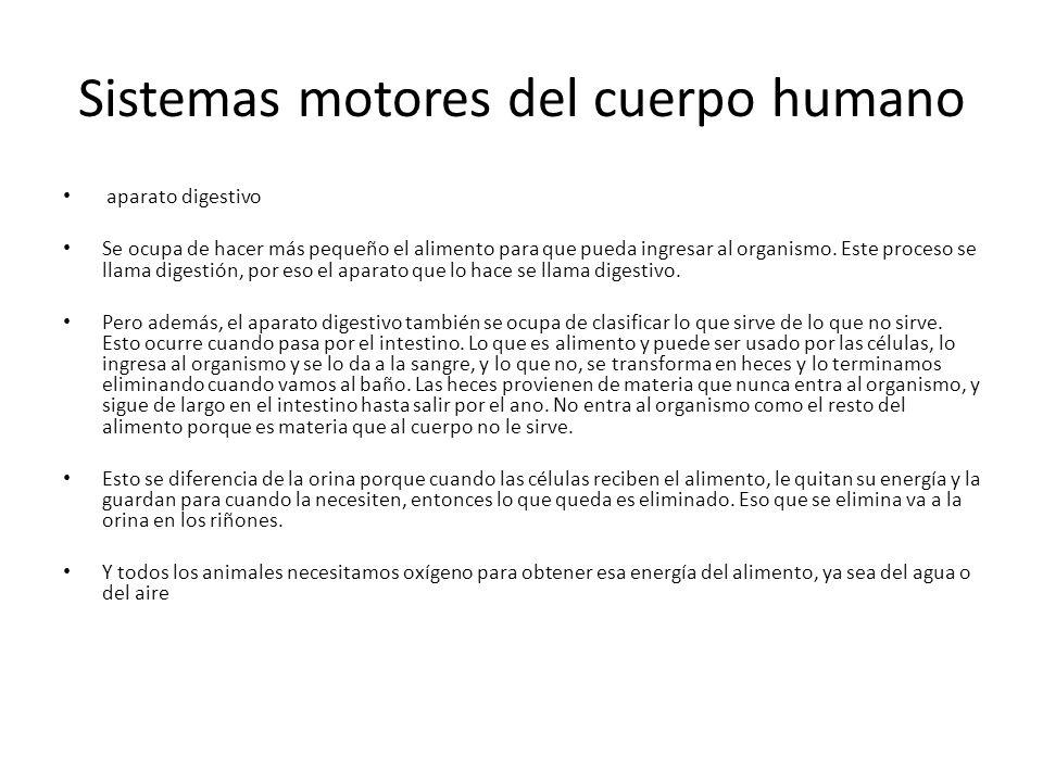 Sistemas motores del cuerpo humano
