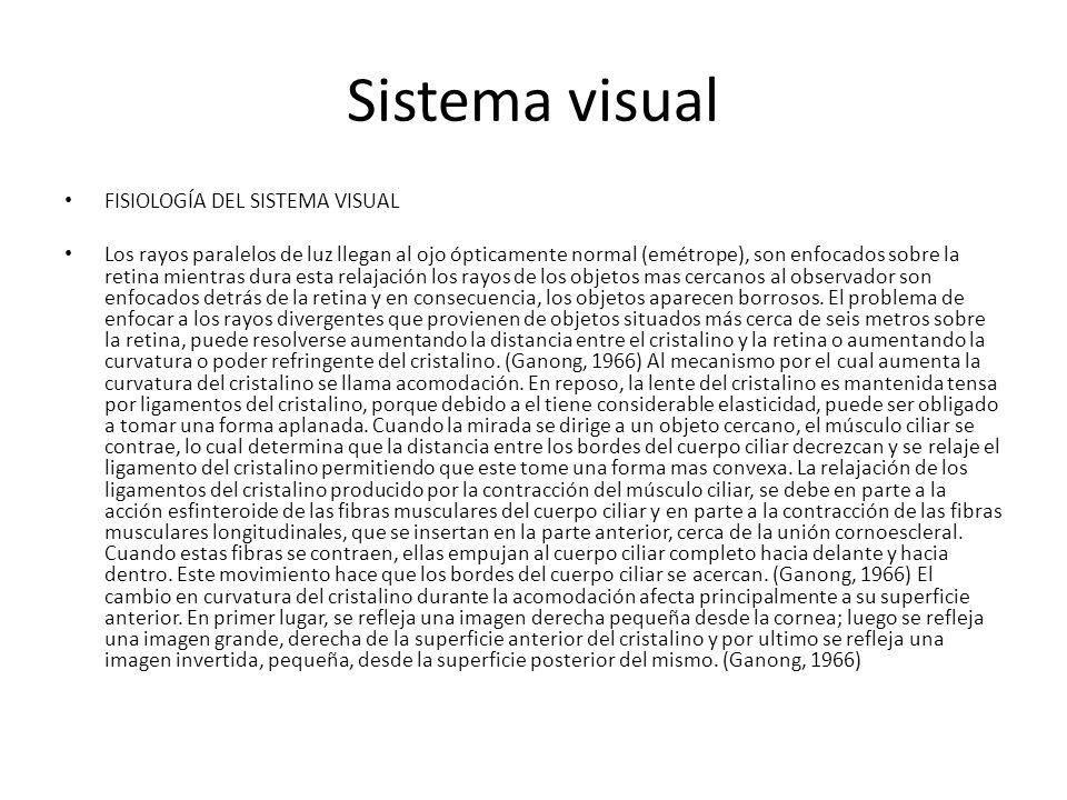 Sistema visual FISIOLOGÍA DEL SISTEMA VISUAL