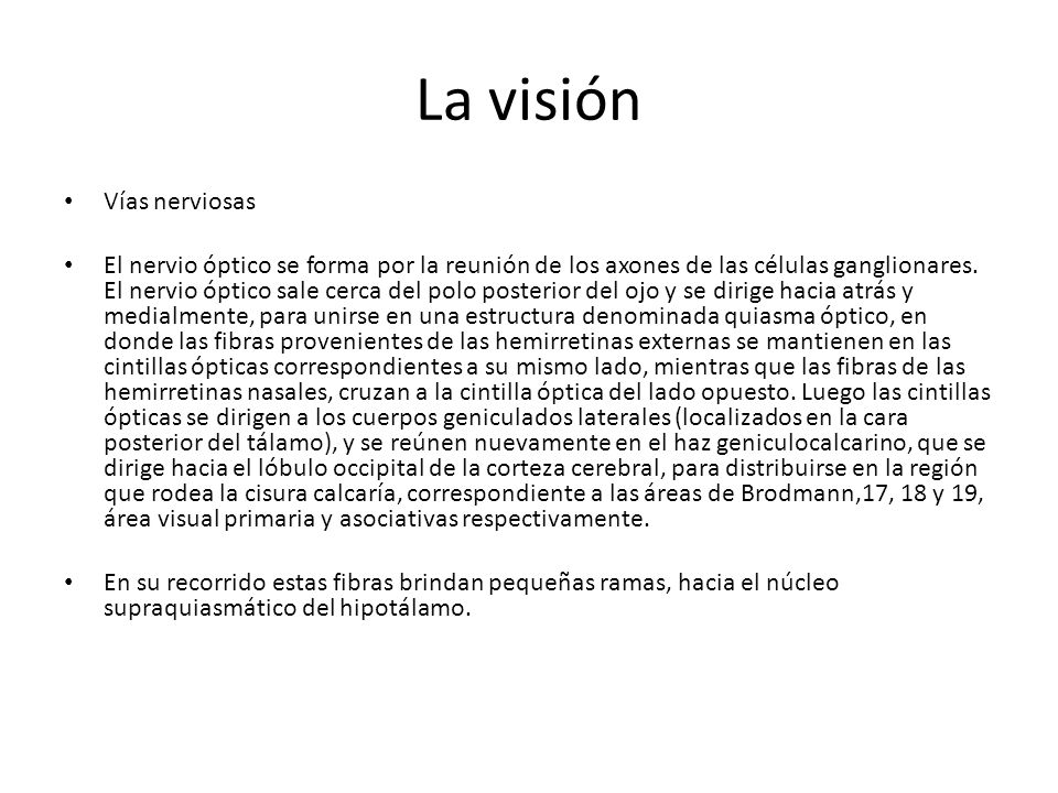 La visión Vías nerviosas