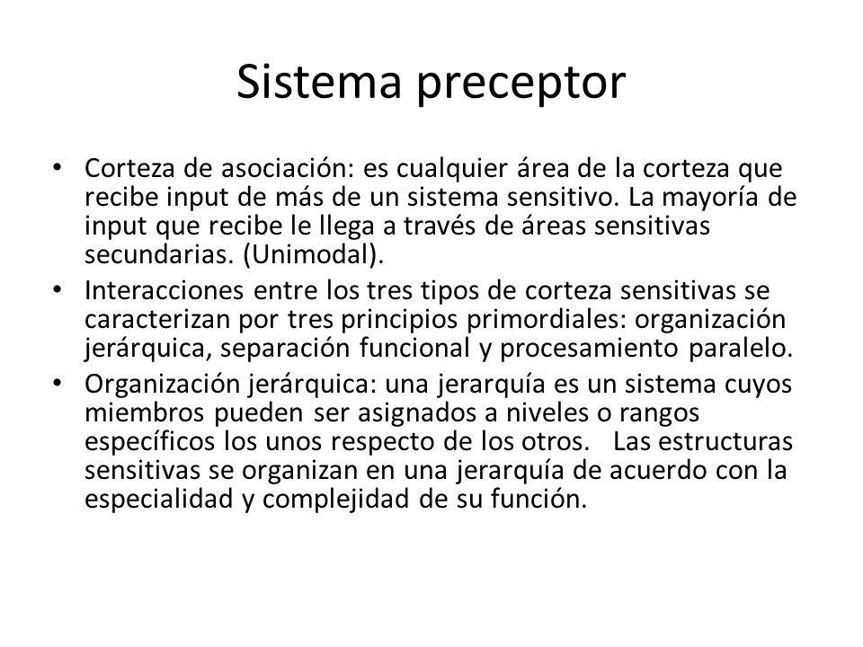 Sistema preceptor