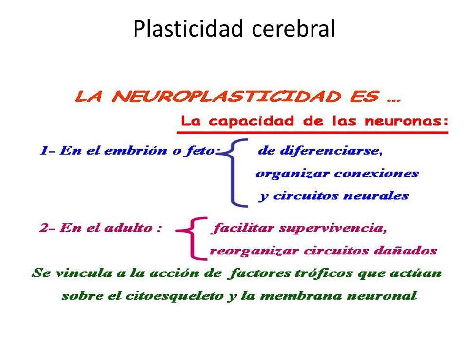 Plasticidad cerebral