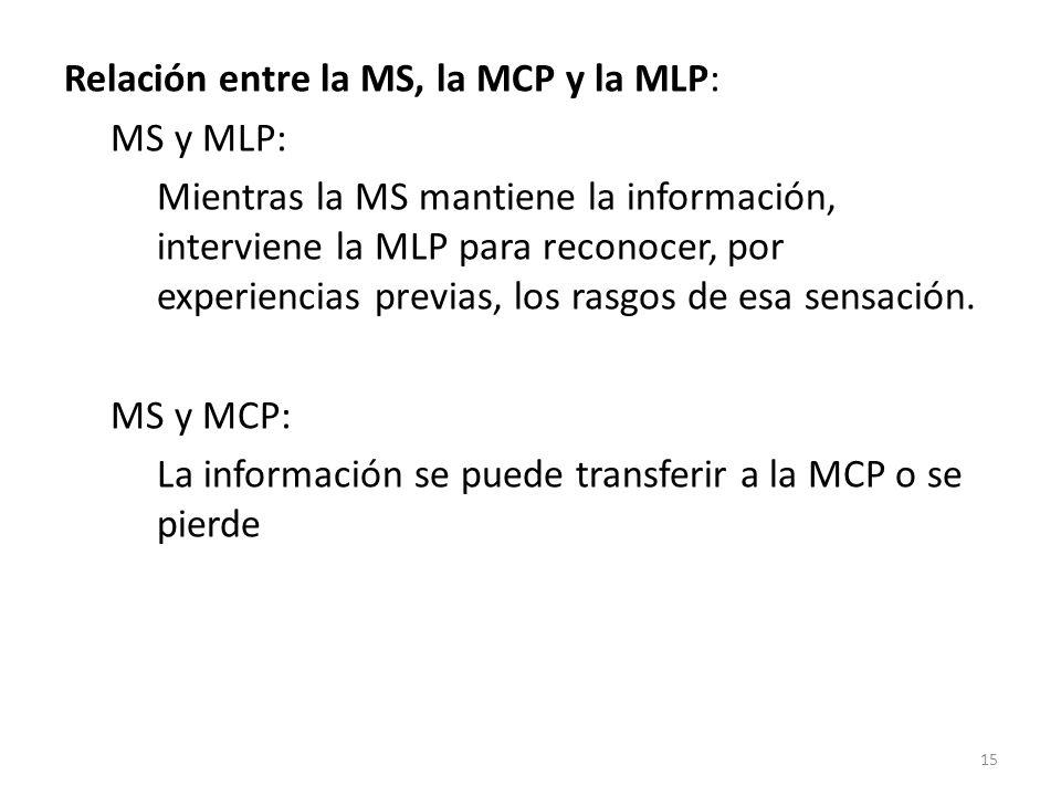 Relación entre la MS, la MCP y la MLP: MS y MLP: Mientras la MS mantiene la información, interviene la MLP para reconocer, por experiencias previas, los rasgos de esa sensación.