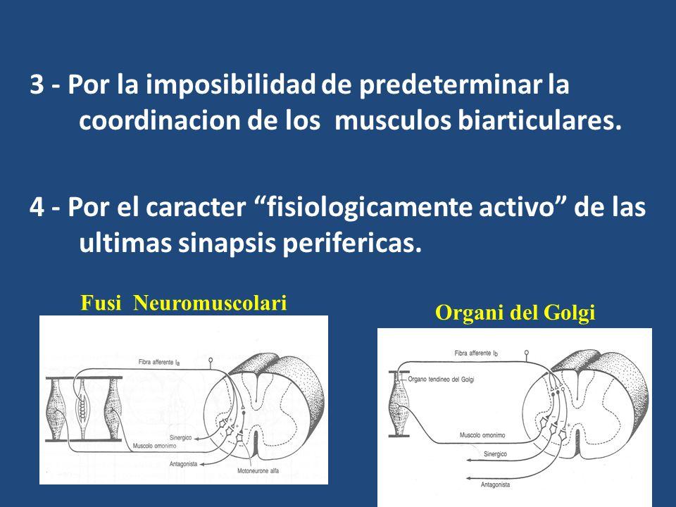 3 - Por la imposibilidad de predeterminar la coordinacion de los musculos biarticulares.