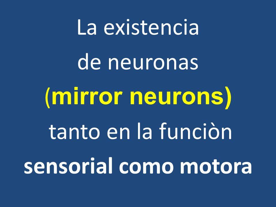 La existencia de neuronas (mirror neurons) tanto en la funciòn sensorial como motora