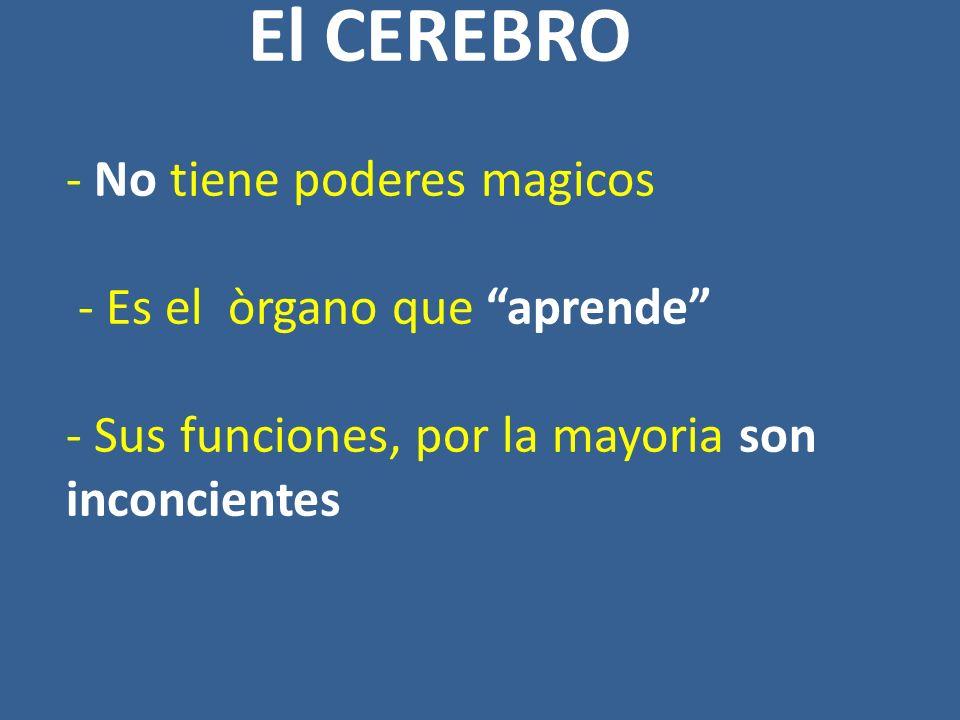 El CEREBRO - No tiene poderes magicos - Es el òrgano que aprende - Sus funciones, por la mayoria son inconcientes