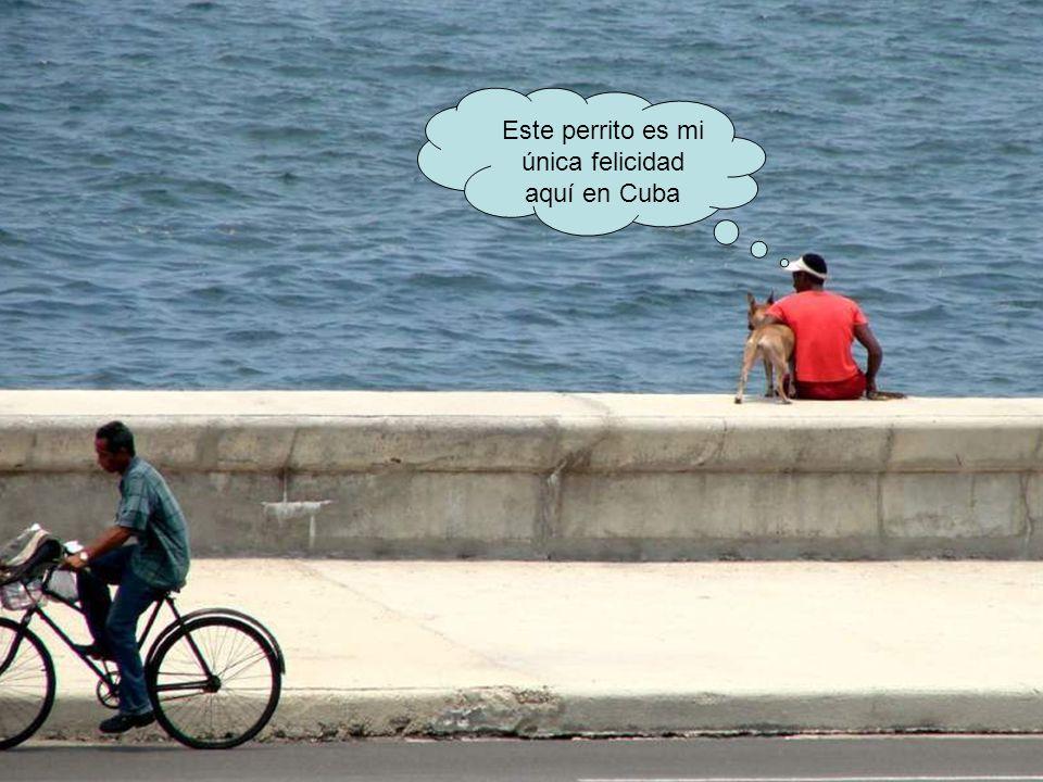 Este perrito es mi única felicidad aquí en Cuba
