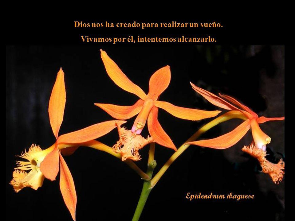 Dios nos ha creado para realizar un sueño.