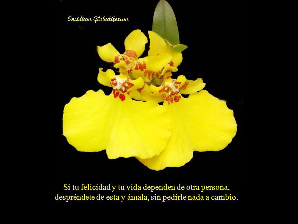 Si tu felicidad y tu vida dependen de otra persona, despréndete de esta y ámala, sin pedirle nada a cambio.