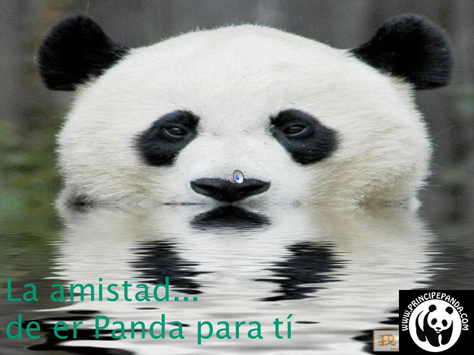 La amistad... de er Panda para tí