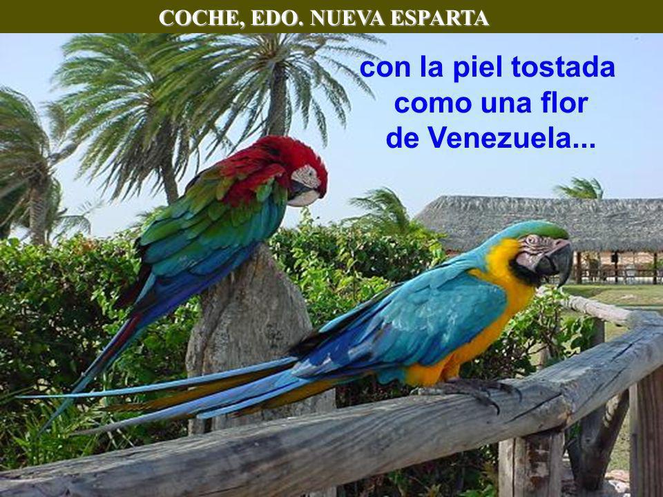 COCHE, EDO. NUEVA ESPARTA como una flor de Venezuela...