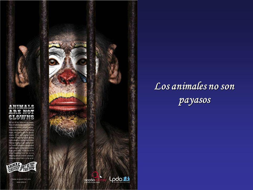 Los animales no son payasos