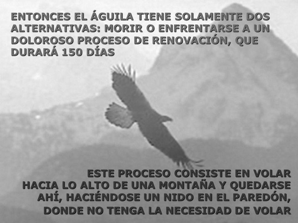 ENTONCES EL ÁGUILA TIENE SOLAMENTE DOS ALTERNATIVAS: MORIR O ENFRENTARSE A UN DOLOROSO PROCESO DE RENOVACIÓN, QUE DURARÁ 150 DÍAS