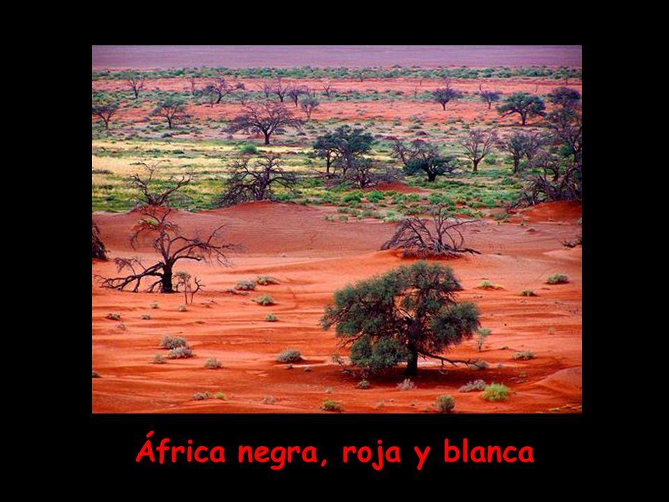 África negra, roja y blanca