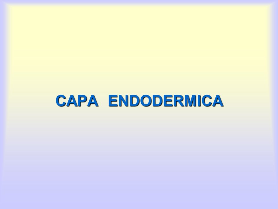 CAPA ENDODERMICA