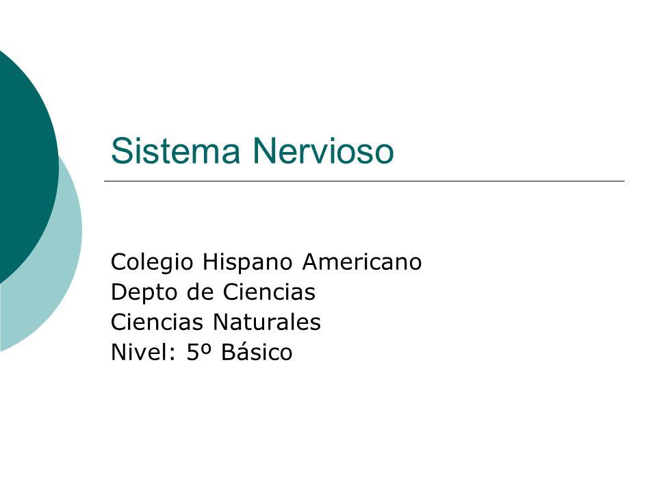 Sistema Nervioso Colegio Hispano Americano Depto de Ciencias