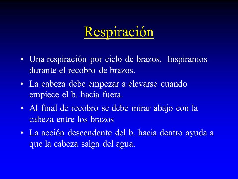 Respiración Una respiración por ciclo de brazos. Inspiramos durante el recobro de brazos.