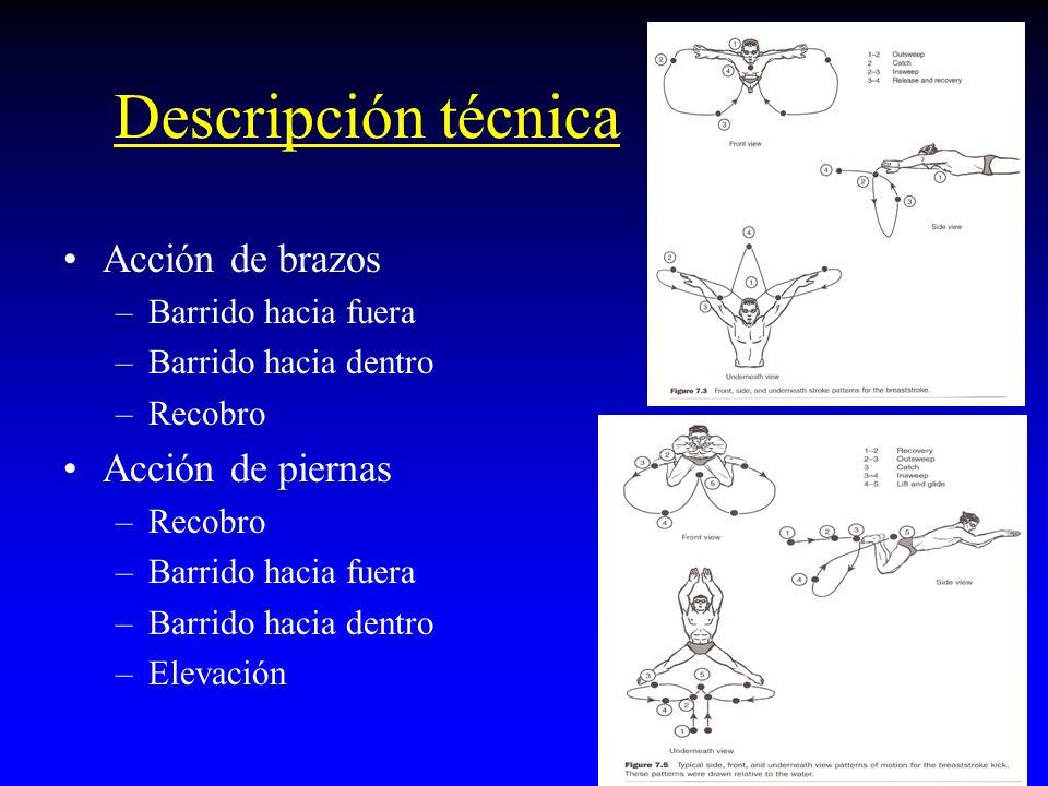 Descripción técnica Acción de brazos Acción de piernas