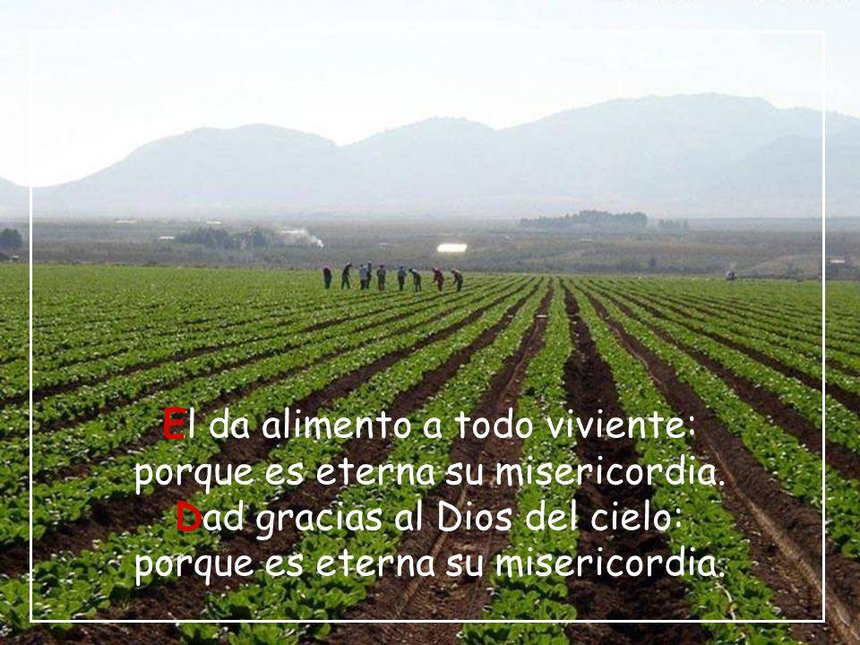 El da alimento a todo viviente: porque es eterna su misericordia