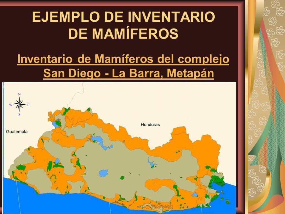 EJEMPLO DE INVENTARIO DE MAMÍFEROS