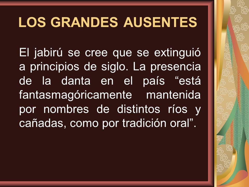 LOS GRANDES AUSENTES