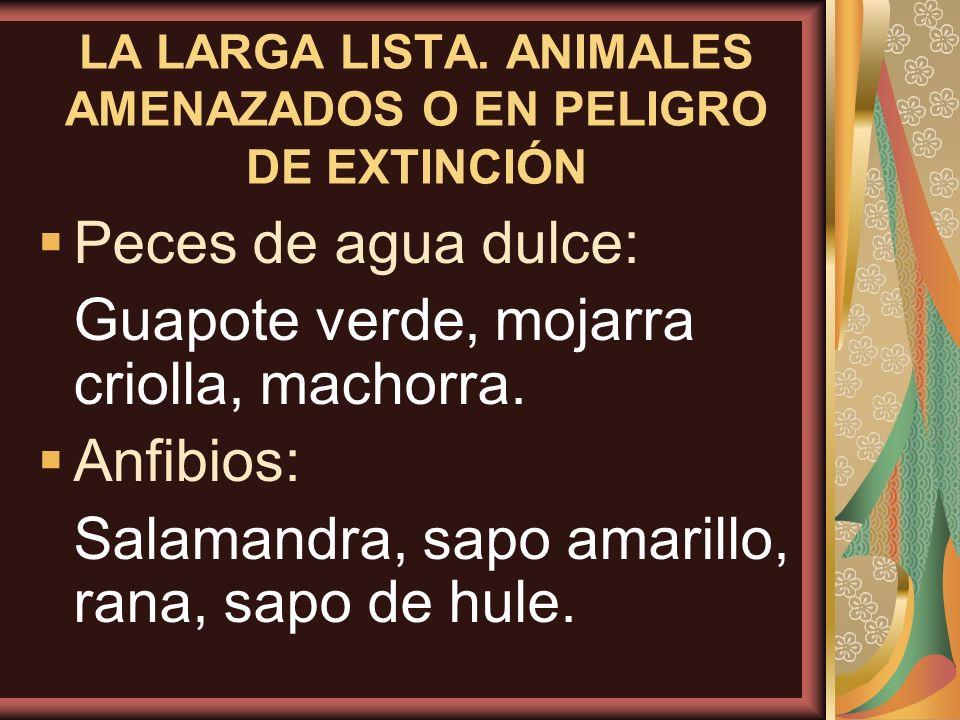 LA LARGA LISTA. ANIMALES AMENAZADOS O EN PELIGRO DE EXTINCIÓN