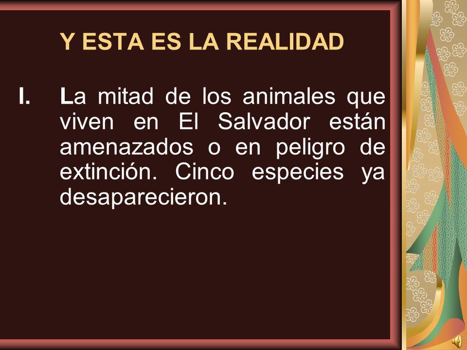 Y ESTA ES LA REALIDAD La mitad de los animales que viven en El Salvador están amenazados o en peligro de extinción.