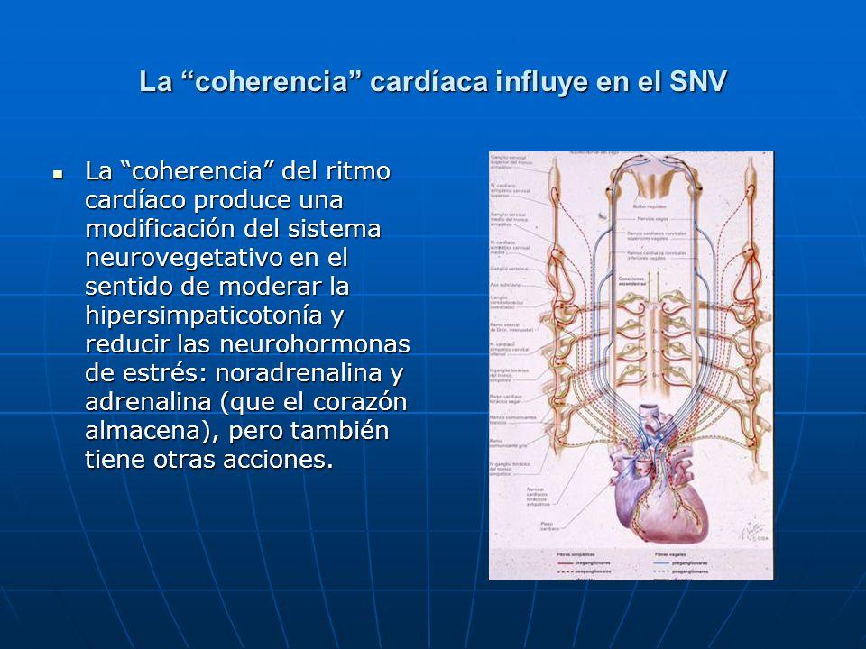 La coherencia cardíaca influye en el SNV