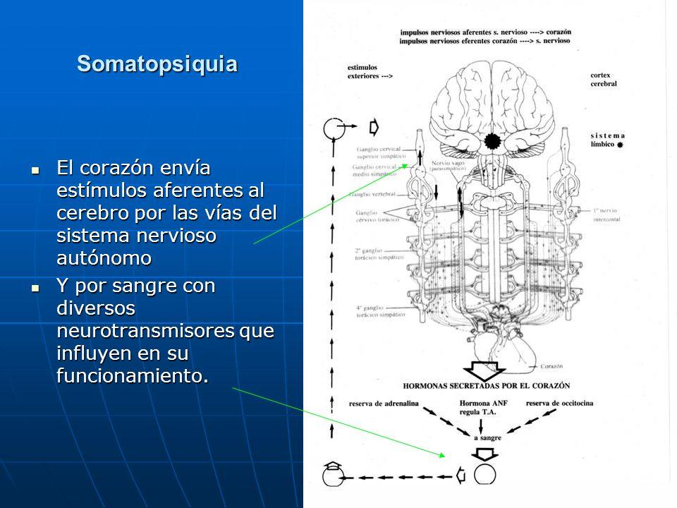 Somatopsiquia El corazón envía estímulos aferentes al cerebro por las vías del sistema nervioso autónomo.