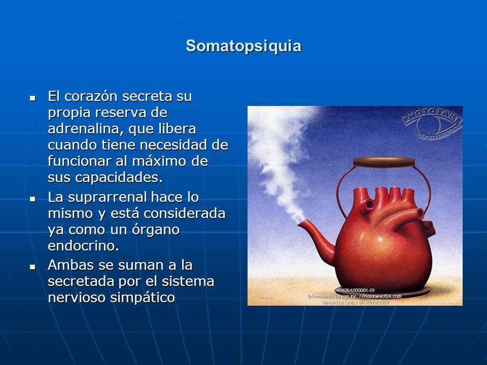 Somatopsiquia El corazón secreta su propia reserva de adrenalina, que libera cuando tiene necesidad de funcionar al máximo de sus capacidades.