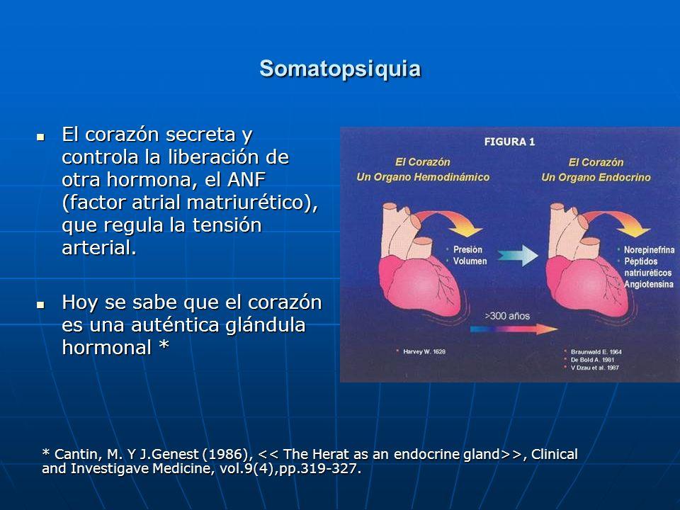 Somatopsiquia El corazón secreta y controla la liberación de otra hormona, el ANF (factor atrial matriurético), que regula la tensión arterial.