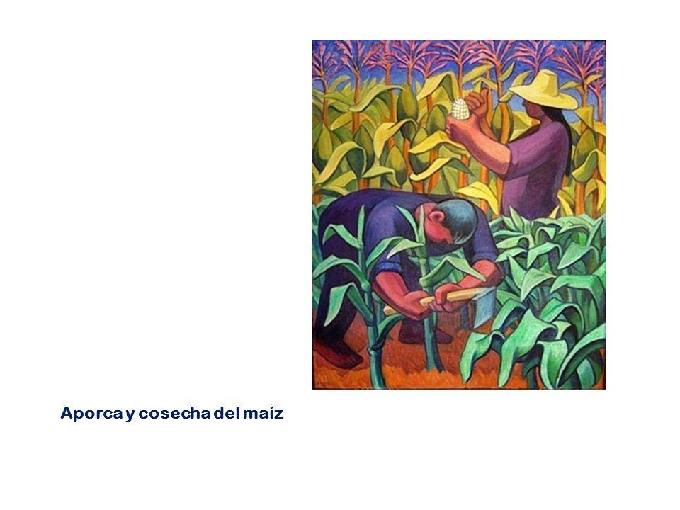 Aporca y cosecha del maíz