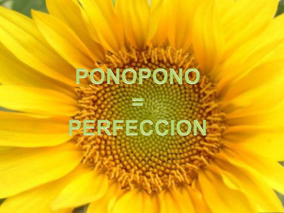 PONOPONO = PERFECCION