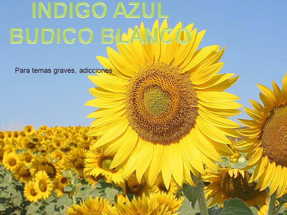 INDIGO AZUL BUDICO BLANCO