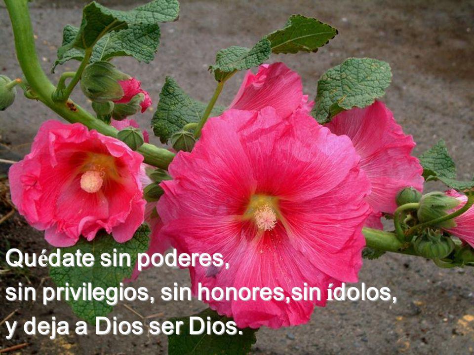 sin privilegios, sin honores,sin ídolos, y deja a Dios ser Dios.